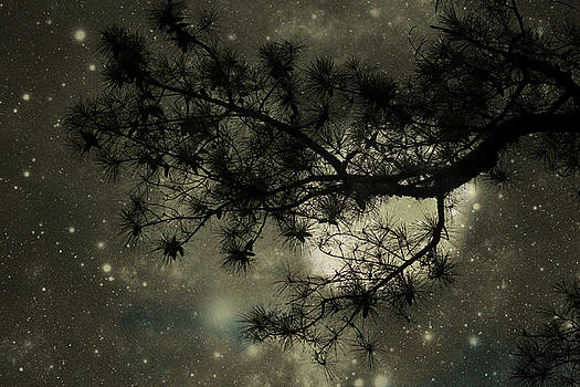 Find Me The Moon by Sheryl Bergman