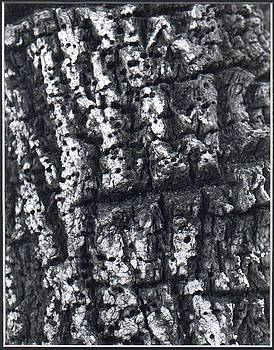 Find the Faces in the Bark by Valerie X Armstrong