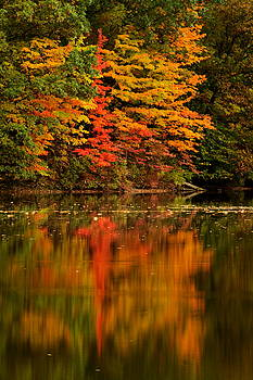 Findley State Park by Amanda Kiplinger