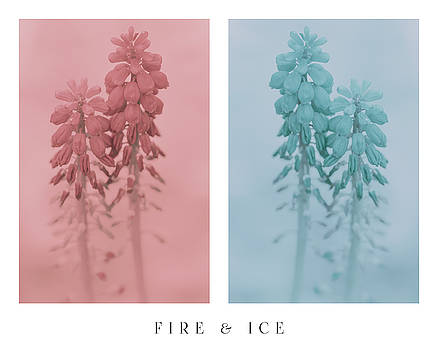 Fire and Ice by Greg Collins
