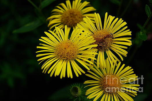 Fireworks In Yellow by John S