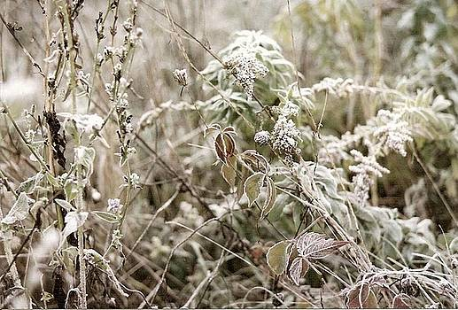 First Frost by Mary Wolf
