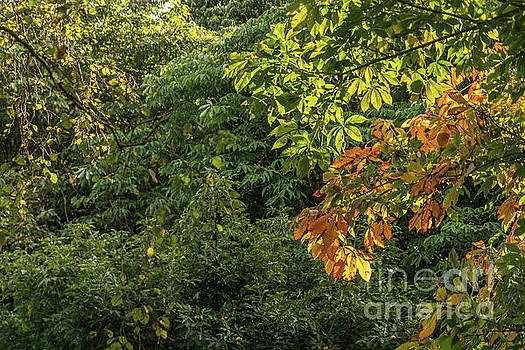 First Signs Of Autumn by Steve Purnell