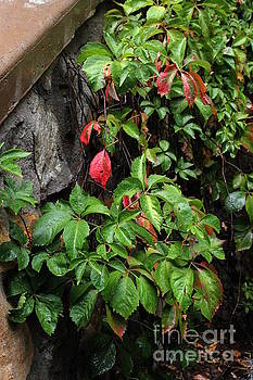 First Signs Of Fall Approaching by Natalie Ortiz