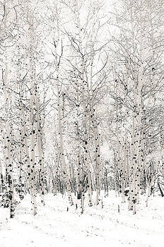 First Snow by The Forests Edge Photography - Diane Sandoval