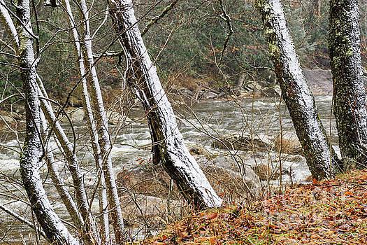 First Snow Williams River  by Thomas R Fletcher