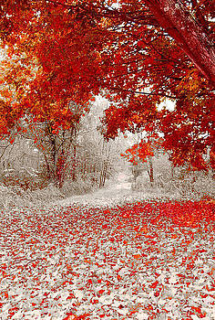 First Snowfall in Duluth by Helen Stapleton