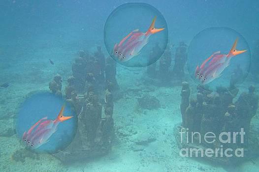 John Malone - Fish Bubbles