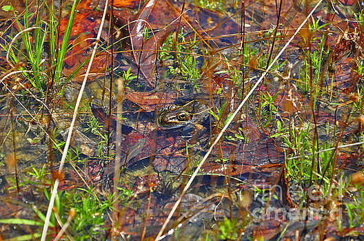 Fish Faces Frog by Al Powell Photography USA