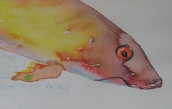 Fish38 by Senol Sak