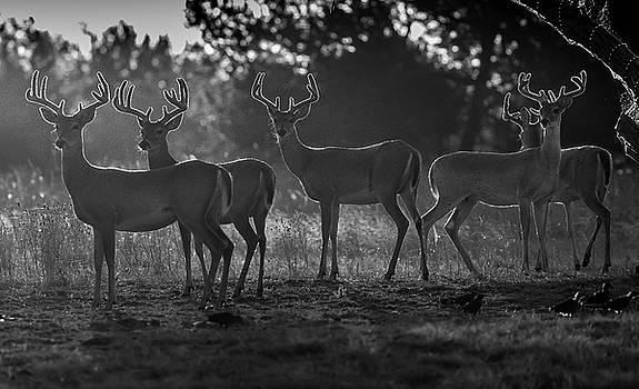 Five Bucks by Bob Marquis