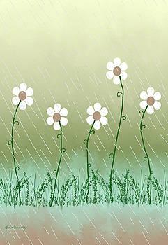 Five Days of Daisies by Rosalie Scanlon