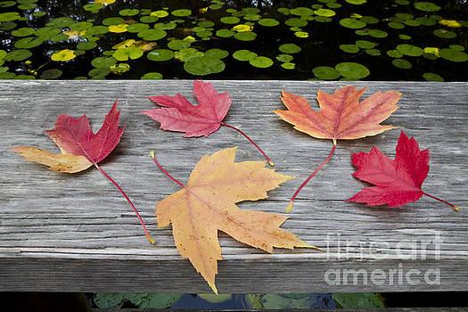 Five Leaves on the Bridge  by Maria Janicki
