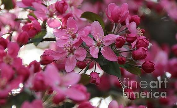 Five Petals  by Yumi Johnson