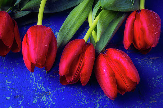 Five Red Tulips by Garry Gay