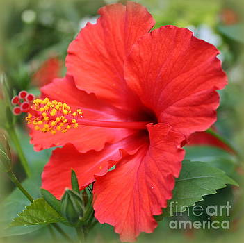 Flamenco Red Hibiscus by Dora Sofia Caputo Photographic Art and Design