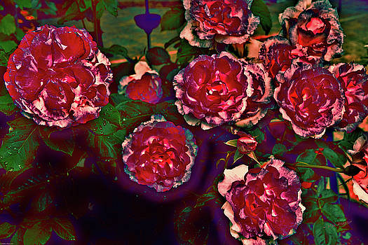Flaming Roses by Mick Anderson
