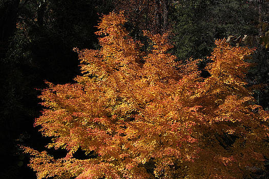 Flaming Tree Brush by Deborah  Crew-Johnson