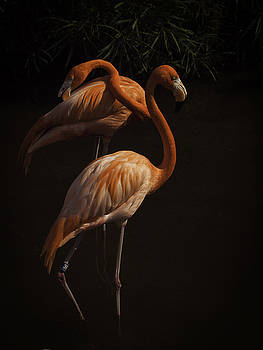 Flamingo Delight by Rob Wilson