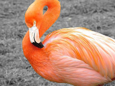 Martina Fagan - Flamingo