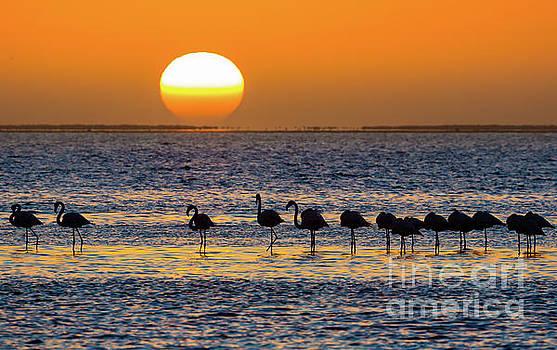 Flamingo Sunset by Inge Johnsson