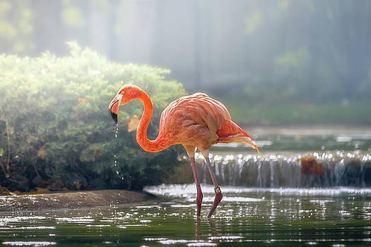 Flamingo by Victoria Winningham