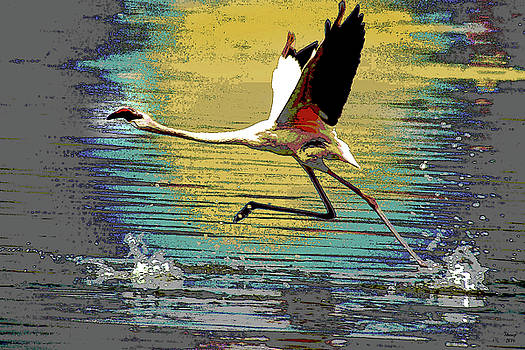 Flamingo Walking on Water by Charles Shoup
