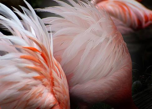 Jeff Brunton - Flamingos 7