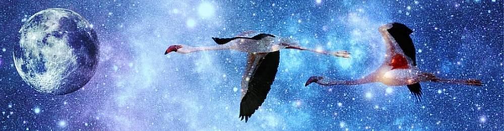 Flamingos in the night sky by Werner Lehmann