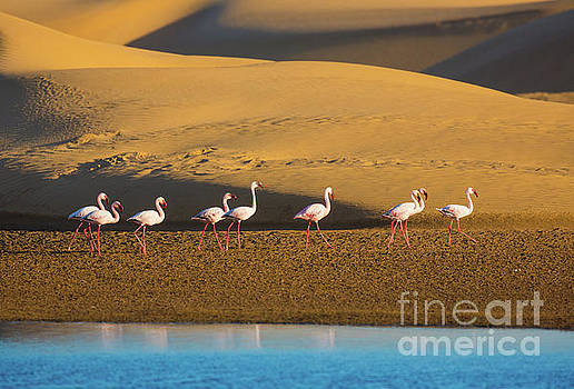 Flamingos in the Sand Dunes by Inge Johnsson