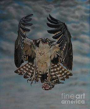 Fleck the Osprey  by Bob Williams