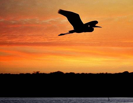 Flight at dusk by Allen Beilschmidt