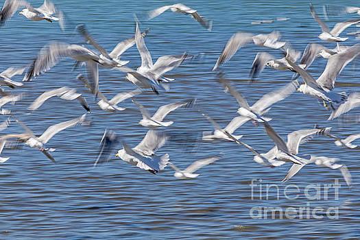 Flight by Kate Brown
