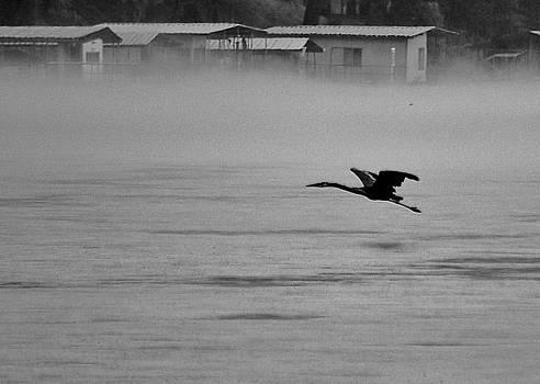 Joy Bradley - Flight Of A Heron