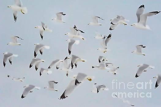 Andrea Kollo - Flight of Seagulls