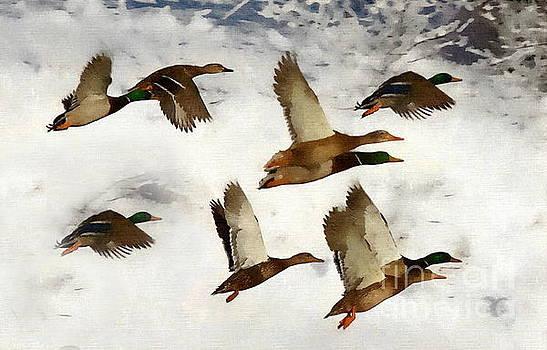 Andrea Kollo - Flight of the Ducks