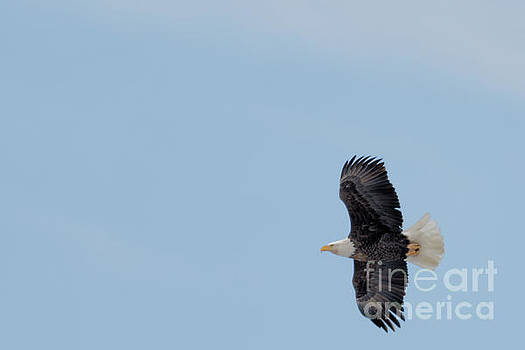 Flight of the Eagle by Natural Focal Point Photography