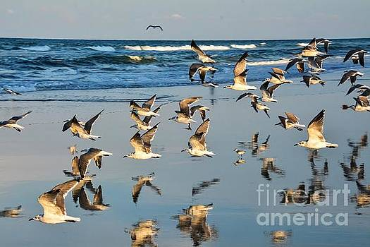 Flight of the Seagull by Debbie Green