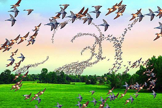 Flight path by John Stuart Webbstock