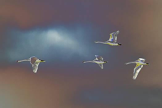 Flight by Richard Patmore