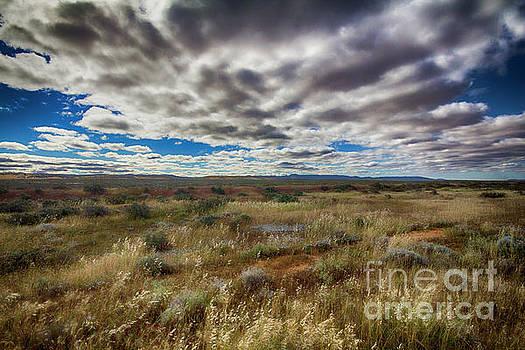 Flinders Ranges Fields  by Douglas Barnard