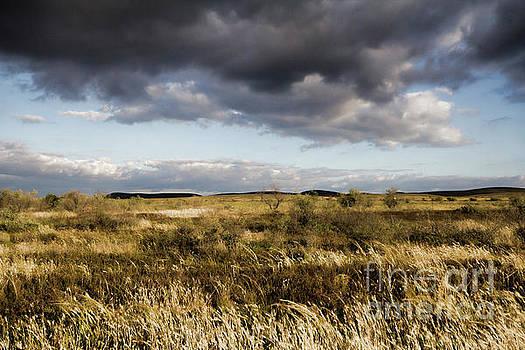 Flinders Ranges Fields V3 by Douglas Barnard