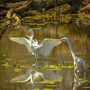 Flirting Egrets by LeeAnn McLaneGoetz McLaneGoetzStudioLLCcom
