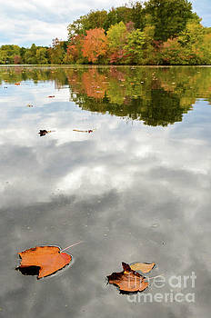 Floating By Nature Photograph by Melissa Fague