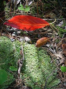 Floating Leaf by Beebe  Barksdale-Bruner