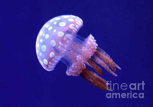 Floating White Spotted Jellyfish by Nina Silver