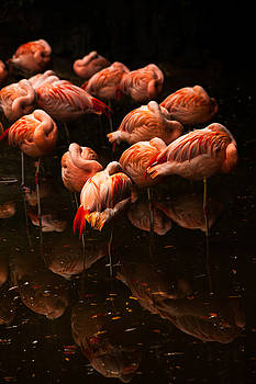 Karol Livote - Flock Of Flamingos