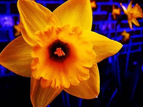 FloraEscent by Toni Jackson