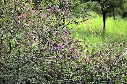Floral bush by Sumit Mehndiratta