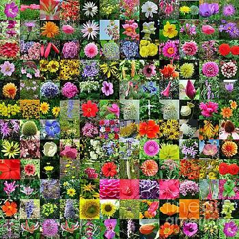 Joe Cashin - Floral collage